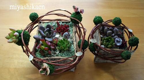 苔玉と多肉植物の寄せ植え