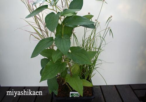 水中植物の寄せ植え