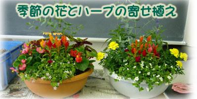 季節の花とハーブの寄せ植え