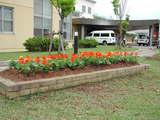 植え終わった花壇