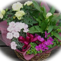 母の日に、花のかごセット