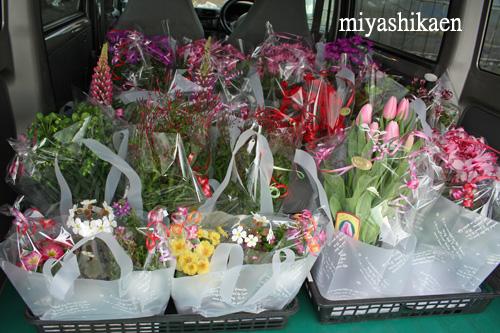 景品の鉢花