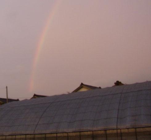 東の空に虹