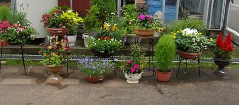花売場入り口の寄せ植え