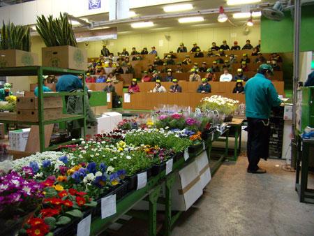 花市場の競り場