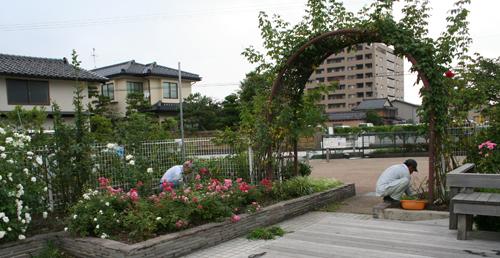 バラ園の除草作業