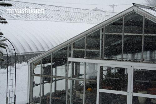 積雪 11.01.30