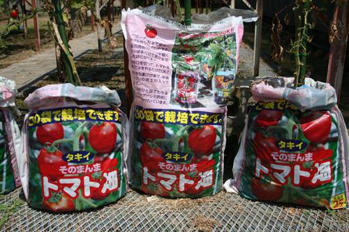 そのまんまトマト畑