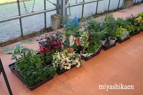 観葉植物の寄せ植え教室