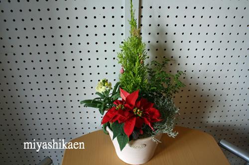 クリスマスの寄せ植え