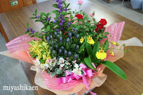 秋の花鉢セット