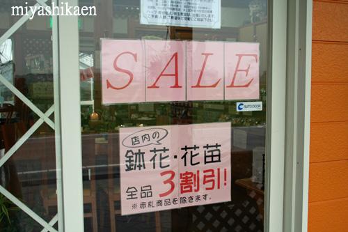 七夕 セール