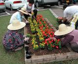 花を植えている人達