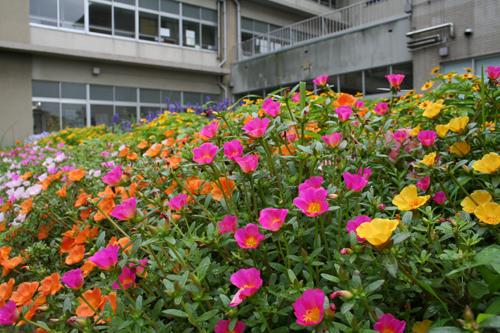 北陽小学校の花壇