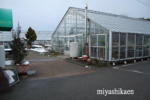 除雪された通路 11.01.28