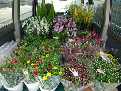 粗品の鉢花