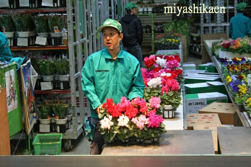 金沢市公設花き市場でシクラメンの競り