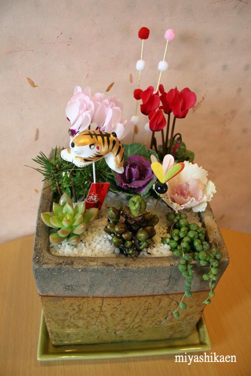 陶器鉢で迎春の寄せ植え