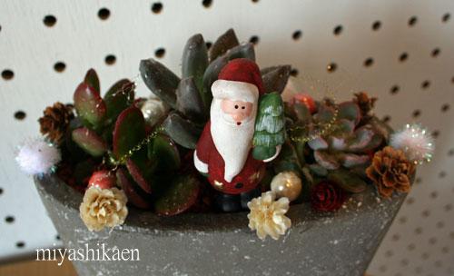 多肉植物 クリスマスの寄せ植え