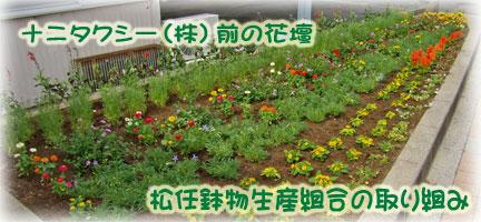松任鉢物生産組合の花壇づくり