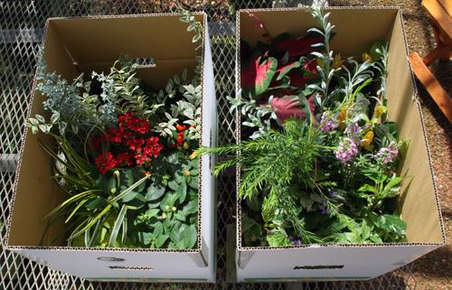 季節の花苗セットの出荷