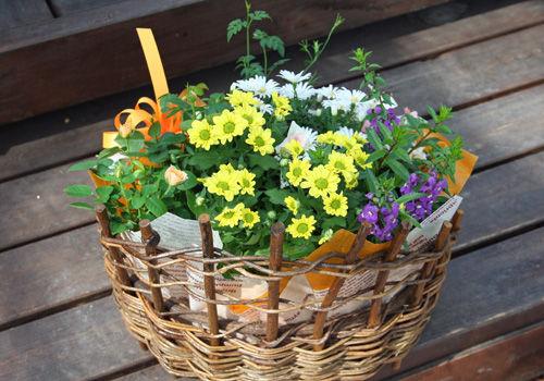 鉢花のバスケット・アレンジ