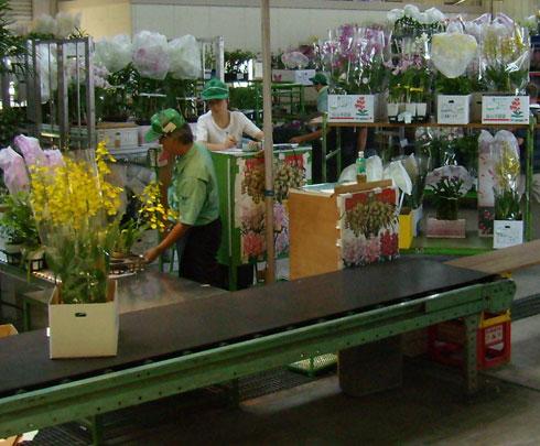 花市場の競り