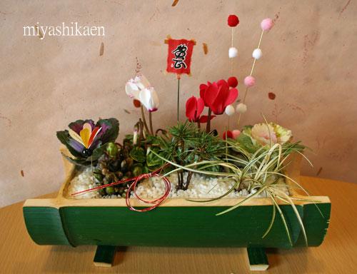青竹の迎春の寄せ植え