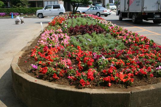 植え込み終了の北陽小学校の花壇