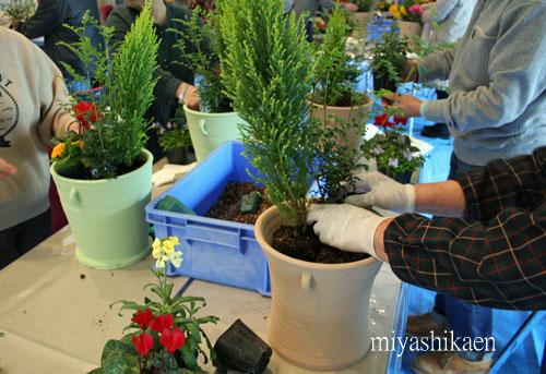 白山市 園芸講習会 クリスマスの寄せ植え