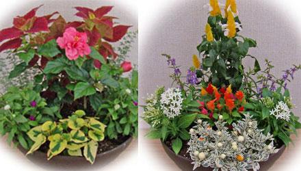 初夏の花の寄せ植え