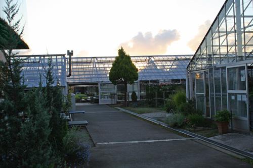 夕方の温室