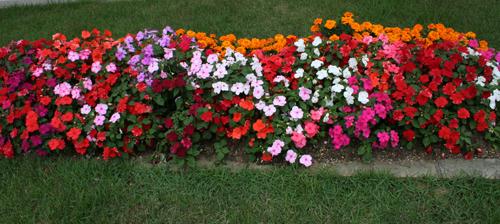 富樫苑の花壇