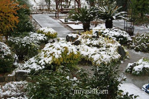 ガーデンも雪景色