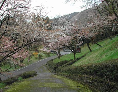 石川県林業試験場