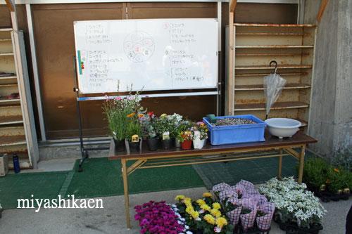 小学校で親子寄せ植え教室