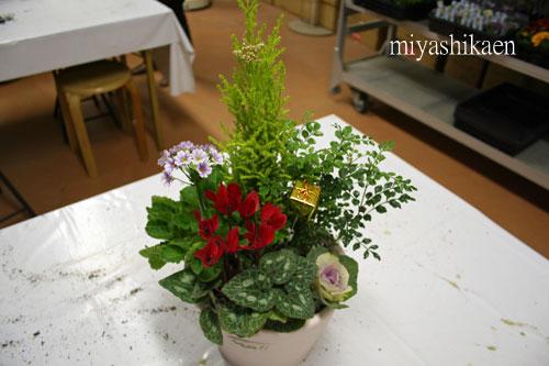 陶器鉢でクリスマスの寄せ植え