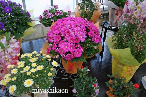 鉢花売り場 11.03.03