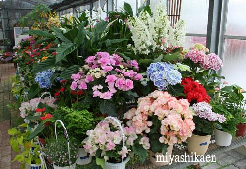 鉢花売り場