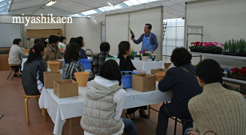 クリスマスの寄せ植え教室