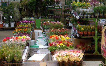 H.19.03.22 花市場