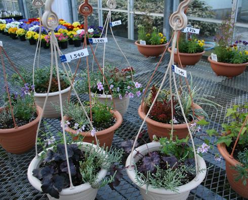 吊り鉢の寄せ植え