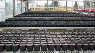 ゼラニウムを植えるポットに、土が入りました。