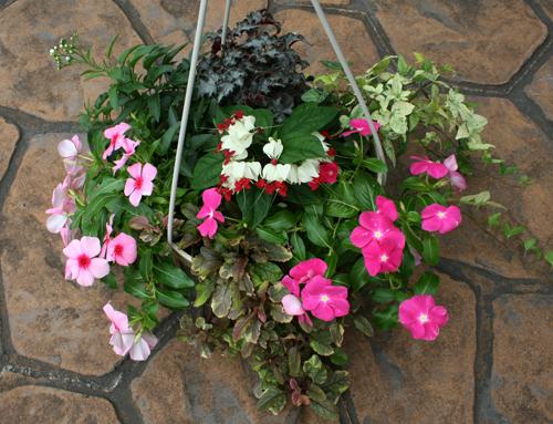 6種類の花苗を植え込んだ吊鉢