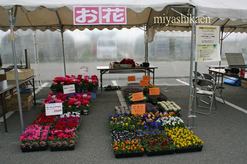宮子花園の鉢花、花苗