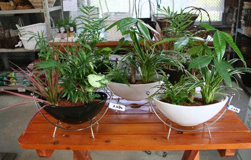 ハンモックの観葉植物