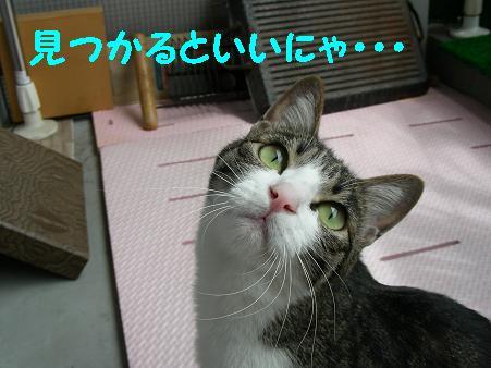 見つかって!!!