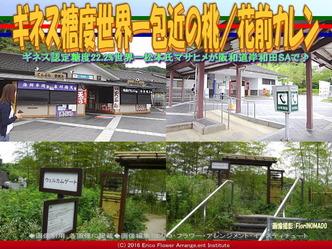 岸和田SA包近の桃/花前カレン画像03