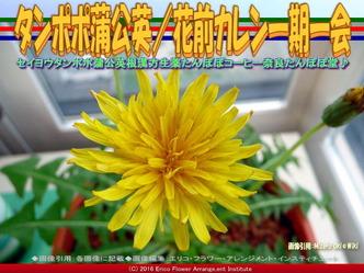 タンポポ蒲公英(2)/花前カレン画像03