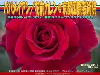 HTパパメイアンHauteur/京都国際芸術院画像02 ▼画像クリックで640x480pxlsに拡大@エリ子花前カレン